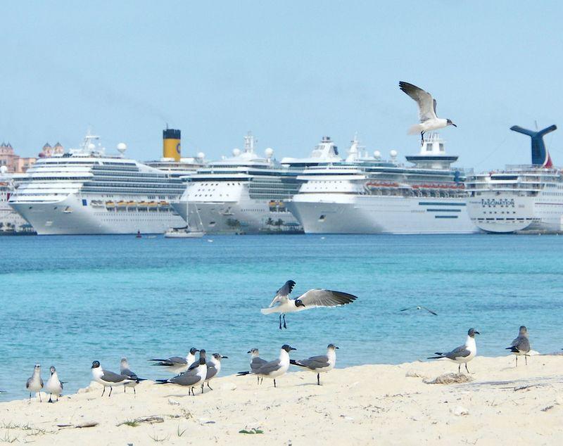 Nassau Bahamas - Crime - Cruise Passengers