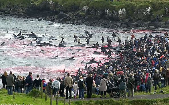 Cruise Industry Supports Mass Murder of Whales in Faroe Islands